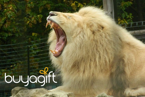 Go to BuyaGift.co.uk to see their animal experiences
