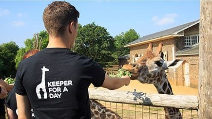 Be a Zookeeper for the Day