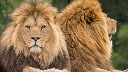 Get clicking with Big Cat Photography
