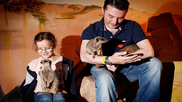Find out more about this Meet the Meerkats Experience