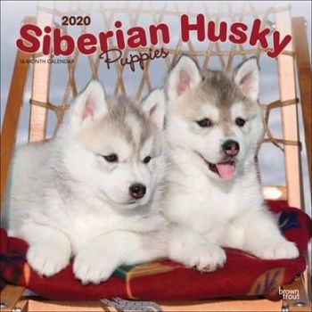 Dig out all the Husky and Alaskan Malamute calendars for 2020 at the CalendarClub.co.uk