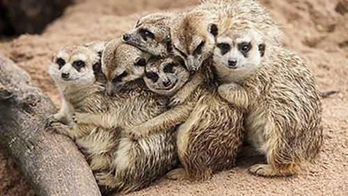 Get 15% off meerkat experiences with Red Letter Days!