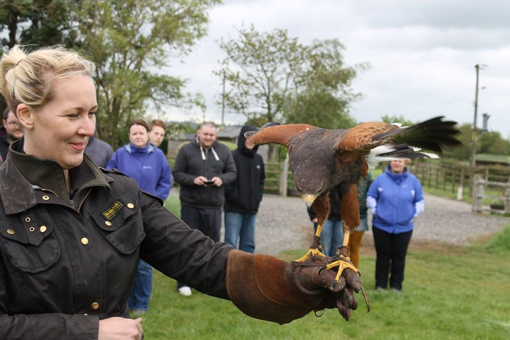 Try a Falconry Taster