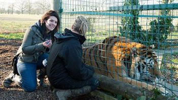 Be a Big Cat Ranger for a Day in Kent