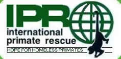 Click here to go to International Primate Rescue