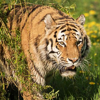 Yorkshire Wildlife Park Photography Day