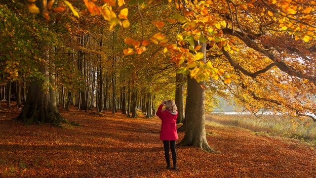 Great ideas of walks for autumn colours