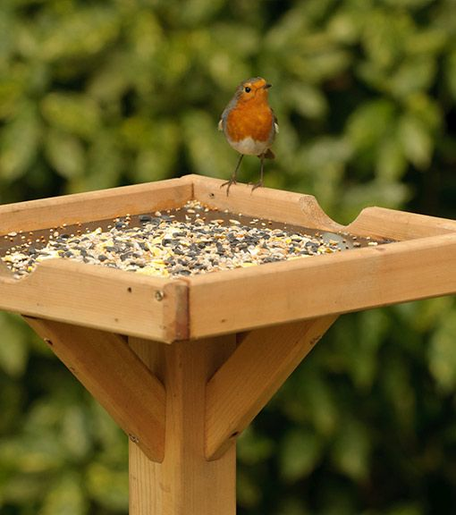 There are bird tables, feeding stations and bird feeders