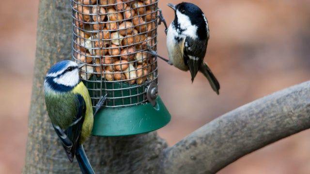 Watch a birdee!