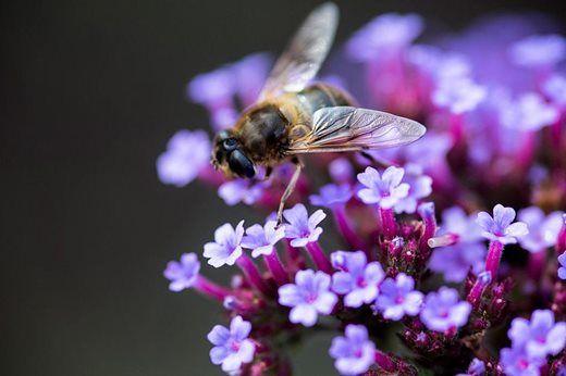 Encourage pollinators into your garden