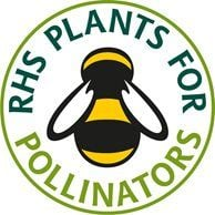 Plant things to encourage pollinators such as bees and butterflies