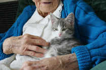There's nothing like a cuddle with a purring cat or kitten