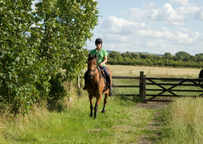 Take your horse on holiday with you - some tips