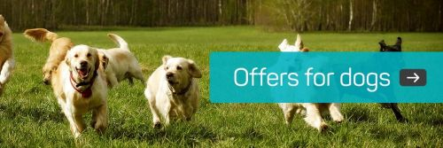 Viovet have everything you need for your dog - and they have a January sale!  Fetch more information!