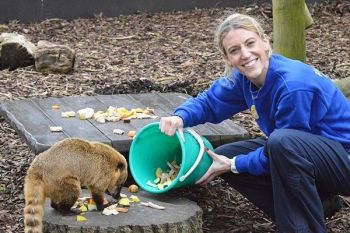 Zoo Keeper Experience at Drusillas Zoo Park