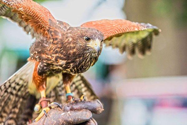 Enjoy a birds of prey experience