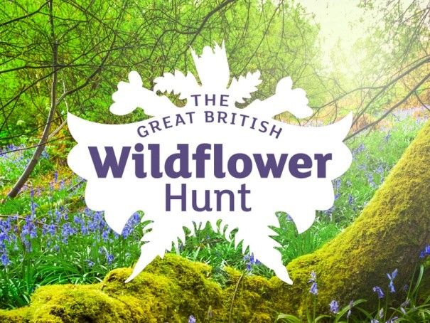 Get involved in the Great British Wildflower Hunt 2021!