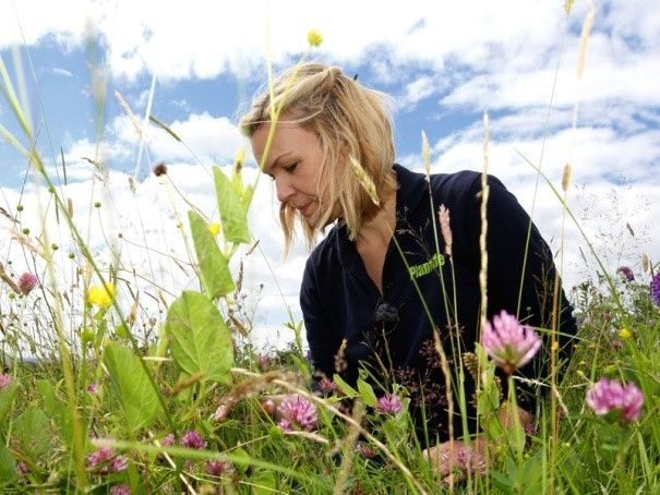 Plantlife's surveys are a great way to improve your knowledge of our beautiful wild flowers