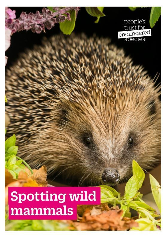 Spotting wild mammals, a PDF from the PTES