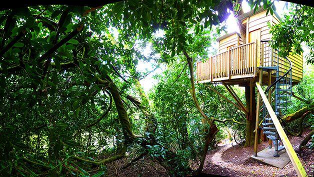 Enjoy a Two Night Break in The Nest Tree House, Devon