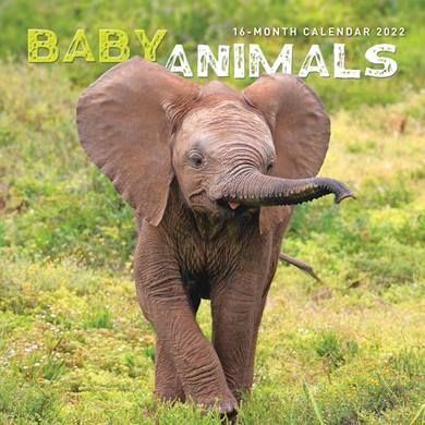 Check out the calendars featuring baby animals for 2022 from the CalendarClub.co.uk