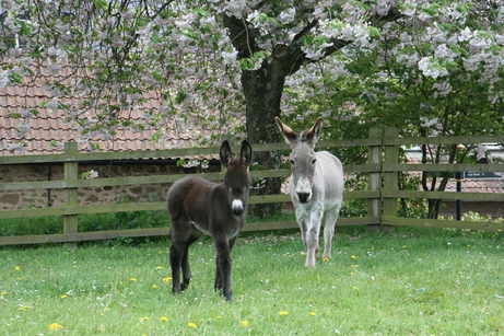 Find out the Donkey Sanctuary helped this little orphan foal
