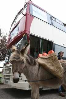 Little donkeys carry a heavy load