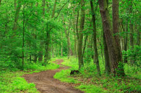 """Instead of """"Walk in the Woods"""" Month, in 2021 the Tree Council is having """"Walk Where You May"""" Month"""