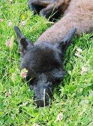 llama farm Kennett Asleep