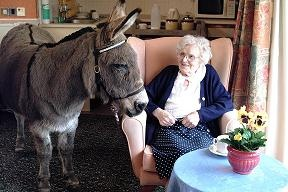 Adopt a donkey and support the donkey therapy work the Donkey Sanctuary is doing - click here to adopt!