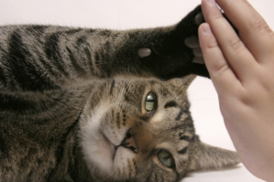The purrfect antidote to stress... a purrfect moment with your feline!
