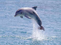Volunteer for dolphins and whales