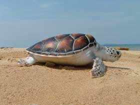 Responsible Travel Turtle Conservation - Thailand
