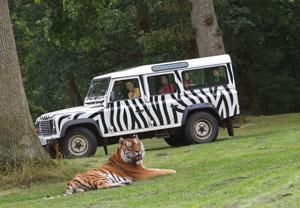 VIP Safari Tour at Longleat Safari Park (Adult)