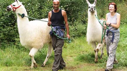 Click here to view Red Letter Days' llama treks in Northamptonshire