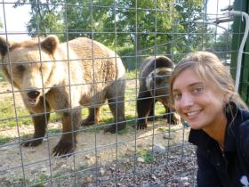 Volunteer with bears in Romania in a sanctuary for bears