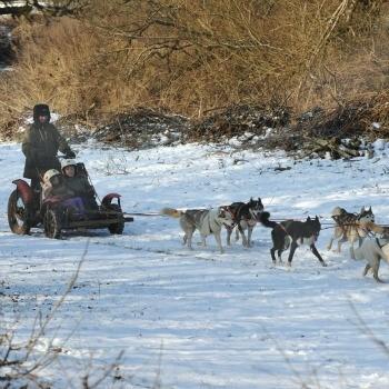 Husky Rides, Sussex