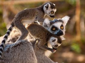 For Madagasca holidays to see wildlife, click here