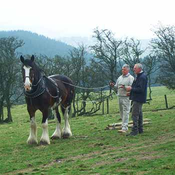 Enjoy a Shire Horse Experience in Shropshire
