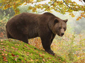 Click here for information on this Bear Tracking holiday in Slovakia