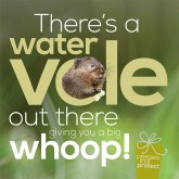 Water voles need your support