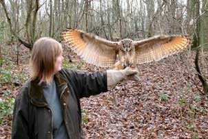 Introduction to Owl Handling in Kent, Fife or Northamptonshire