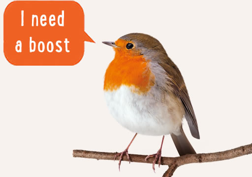 Give the birds in your garden a boost this winter