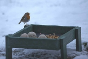 Some birds like a Ground Feeder Tray