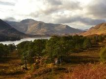 Conservation volunteering in Scotland