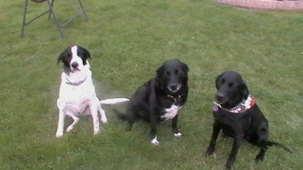 Monty &the girls