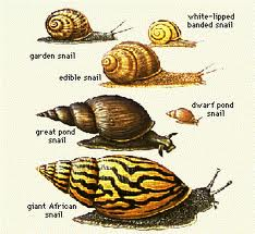 snails various