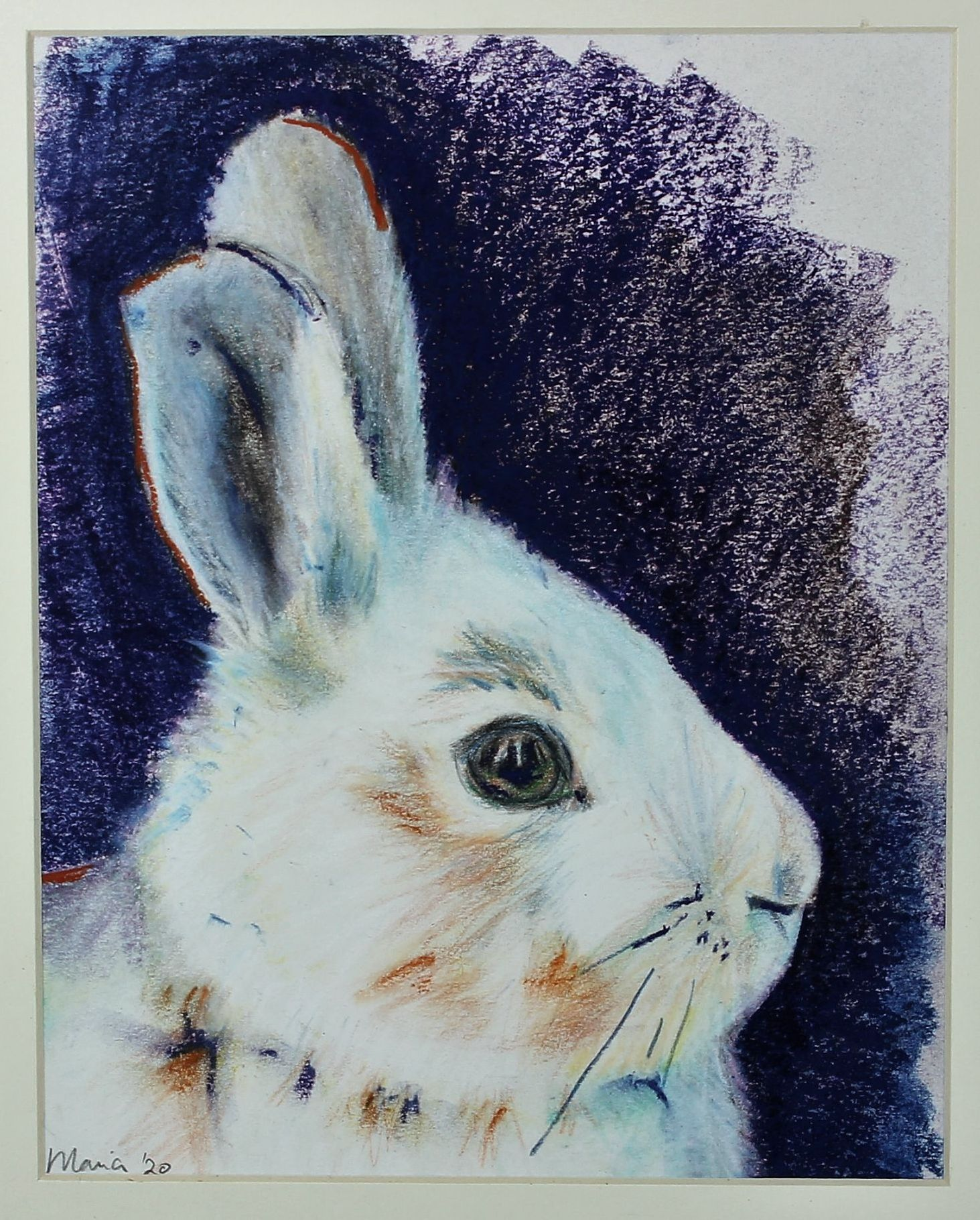 Pet Rabbit, pastel on paper