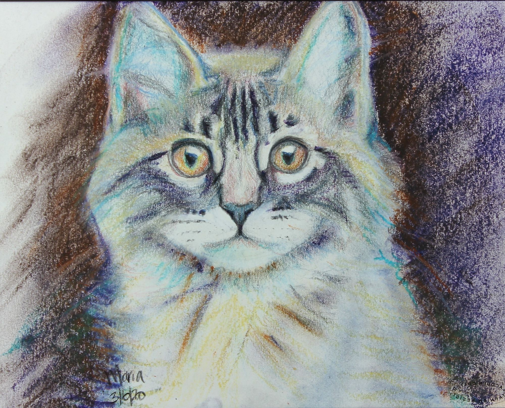 Kitten, pastel on paper