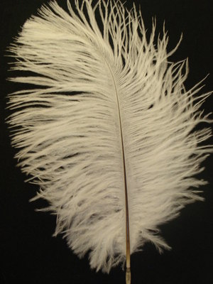 Ostrich Feather - White